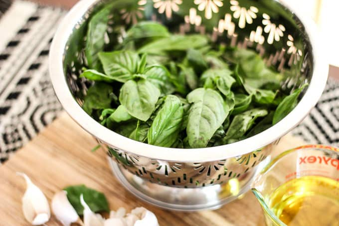 Basil for Making Pesto