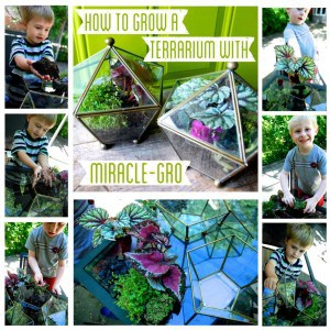How to Grow a Terrarium with Miracle Gro
