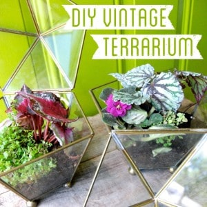 How to Grow in a Vintage Terrarium