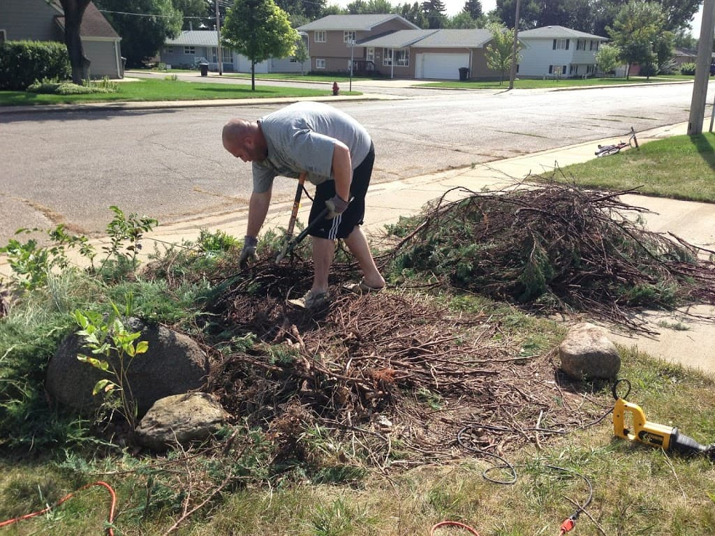 Removing Evergreen Shrub
