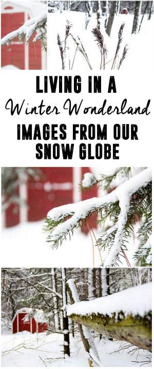 Snowy Winter Outdoor Woods Pictures