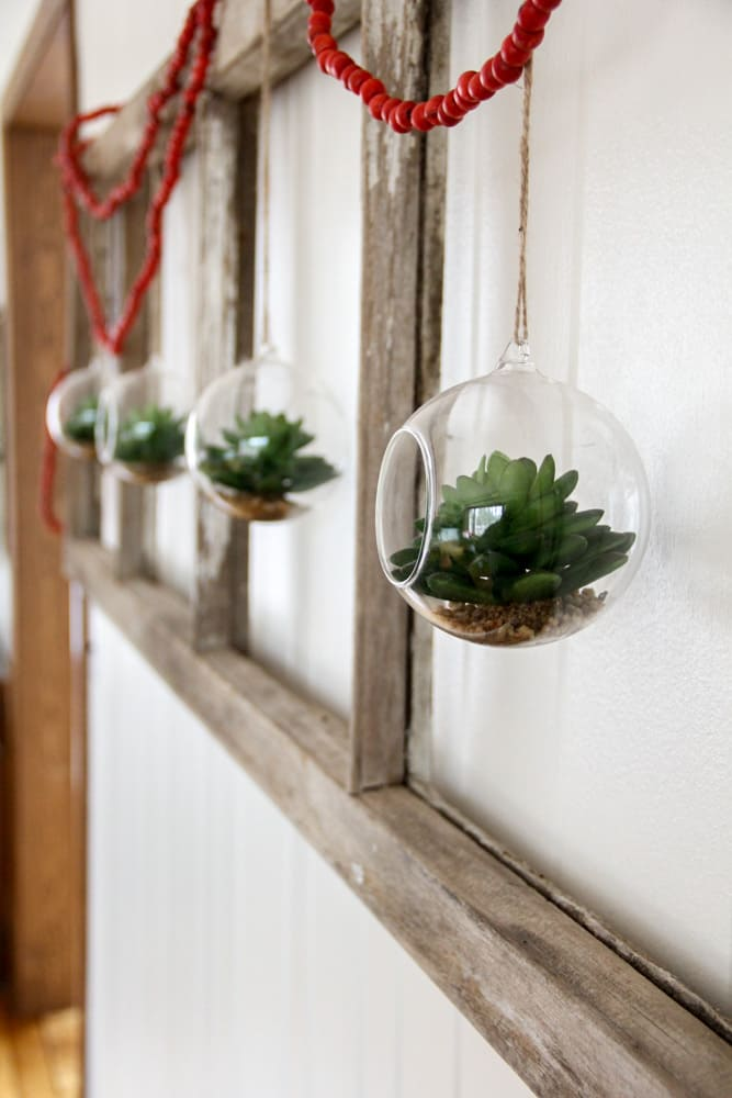 Succulent Globes hung in old window