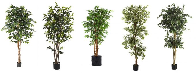Faux Ficus Trees